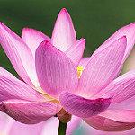 lotus 2 square