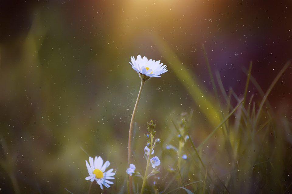 Lenteblog: voorjaarsmoeheid en hooikoorts