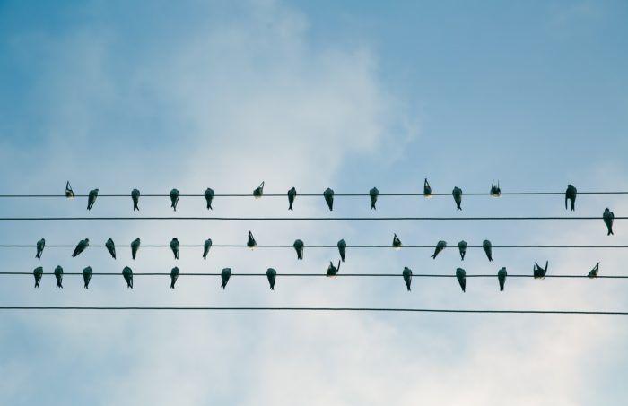 Verbonden vogels