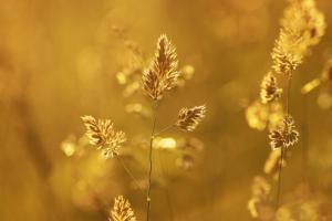 allergie behandel je met acupunctuur en kruiden