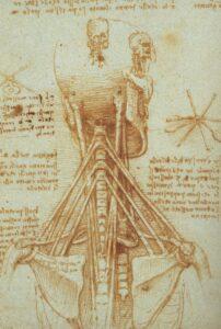 anatomie van de nek - acupunctuur Purmerend Hoorn Volendam