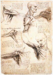 anatomie schouder - acupunctuur Purmerend